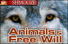 Animals and Free Will